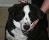 """Adult Male Dog - Hound: """"Buster"""""""