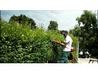 J GROOM GARDEN SERVICE hedge cutting, tree pruning, shrub trimming plus much more