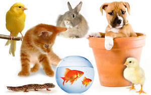 ~ * Loving, Experienced, Professional Pet Sitter Available! * ~