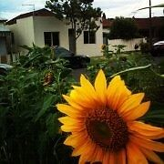 SINGLE ROOM - AWESOME SHARE HOUSE - FULLY FURNISHED Brunswick Moreland Area Preview