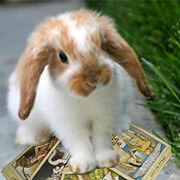 Tarot Card Readings from Honey Bunny Rabbits Foot