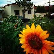BIG COUPLES RM - AWSOME SHARE HOUSE - CLOSE TO MELB UNI & CITY