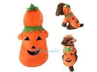 XLARGE PUMPKIN DOG OUTFIT