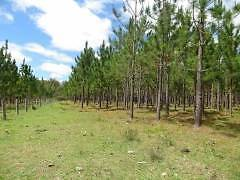 177 Hectares Vacant Land on Beaury Creek! Urbenville Tenterfield Area Preview