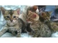 Beautiful kittens needing homed