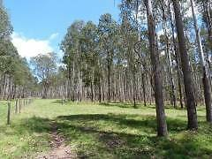 CATTLE-TIMBER-PLANTATION Bonalbo Kyogle Area Preview