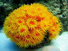 Salt Water Coral/Crabs/Shrimp (SOLD)