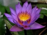Thai massage by poppy