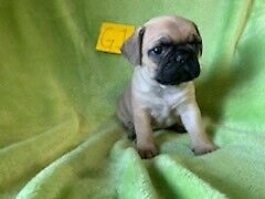 Adopt Dogs & Puppies Locally in Calgary | Pets | Kijiji