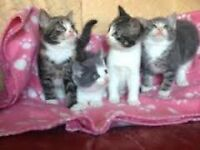 4 cute kittens for sale need to be gone asap x