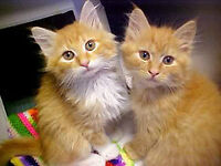 Local Cat and Kitten Rescue looking for Forever Homes