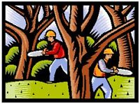 TREE SERVICES,REMOVAL,DISPOSAL. 289-600-4715. 20% off