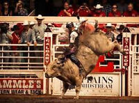 Stampede Rodeo Infield - Row F Great Seats - Monday, July 6