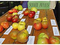 Apple Day Brighton
