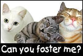 WE NEED FOSTER CARERS!
