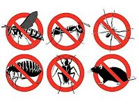 Pest Control - London, Essex, Kent