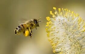 Bees pollination,all crops fruits and veggies