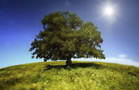Tree Trimming, Pruning, Limbing, Removal