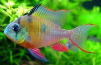 We take any unwanted fish,aquariums, tanks &accessories