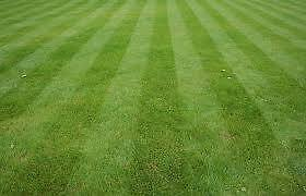 Aeration/ Power Rake/ Lawn care in SE Calgary