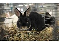 Five rabbits for sale