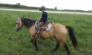 Looking for a well trained horse for children and new riders Kawartha Lakes Peterborough Area image 1