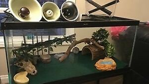 50 Gallon Terrarium incl. lamps and all accessories