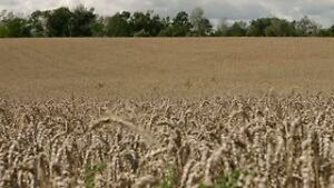 Looking to rent land in Wiarton, Hepworth, Kemble areas