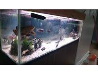 Fish tank full setup + fish