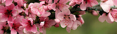 Apple_Blossom_Park