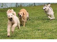 Dog Walking and Petsitter
