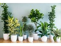 WANTED: House Plants