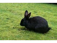 2 female rabbits for sale with hutch