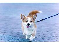 Adventurous dog walking