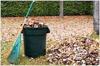 LEAF RAKING & YARD MAINTENANCE // 613-316-5772