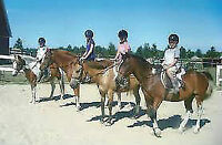 Open House, Horseback Riding Lesson and Horse Camp Registration