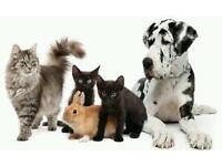 Dog Walker / Pet Sitter - any pet, Large or Small