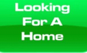 Looking for a 2 bedroom Apartment or house rental Oct 1st