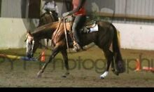 4yr old WP trained QH gelding Jimboomba Logan Area Preview