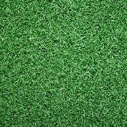 Astro turf Surry Hills Inner Sydney Preview