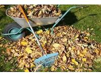 Autumn planting, hedge planting, bulbs, shrubs, gardening advice, autumn pruning, lawn care