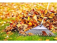 Gardener. Autumn tidy ups, leaf clearing, light pruning, winter prep, bulb planting, tubs and pots