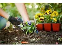 Lady Gardener