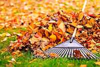 Fall yard clean up, leaf removal