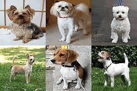 Looking for a small dog/ puppy for free Burton Salisbury Area Preview