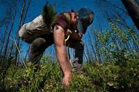 Treeplanters wanted