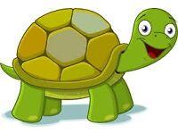 Tortoise found