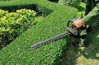Small Hedge trimming