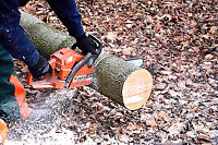 NEED YOUR WOOD CUT???   $12/hr