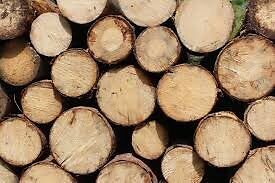 Firewood, fill your truck $50!